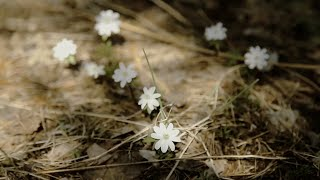 Природа России. Весна.