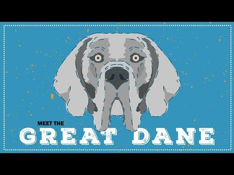 Great Dane | Breed Spotlight