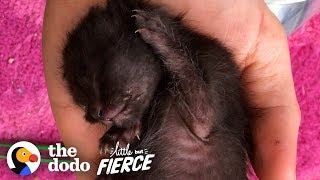 Watch As Kitten Smaller Than An iPhone Grows Up | The Dodo Little But Fierce