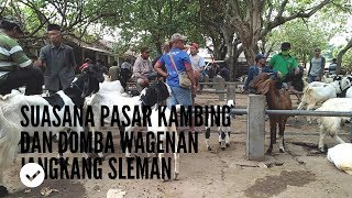 Download Video Suasana Pasar Kambing dan Domba Wagenan Jangkang Sleman MP3 3GP MP4