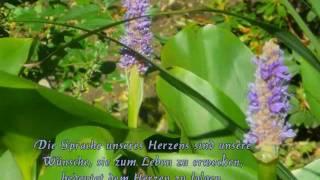 Ein Leben in Licht und Liebe - Musik von Gomer Edwin Evans