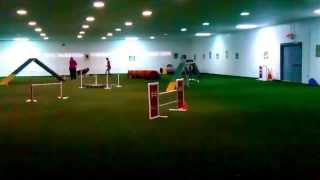 Keo And Gina At Sportsmen's Dog Training Club Agility Trial