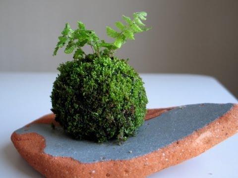 How to Make a Moss Ball: Emmymade