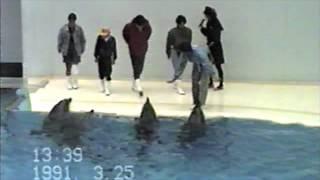 須磨水族園 イルカSHOW 1991/03/25.