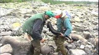 Ekspedicija Ribolovaca Sibir 1996.  part 4