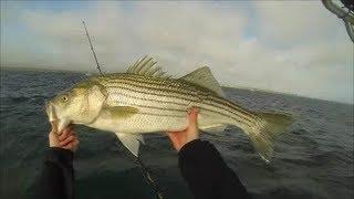 Insane Striper Fishing! -- Live Lining Mackerel for Striped Bass -- Cape Cod