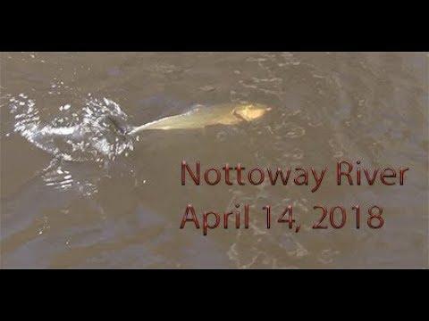 NottowayRiver 14April2018