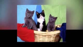смешные ролики 2014  Смешные коты