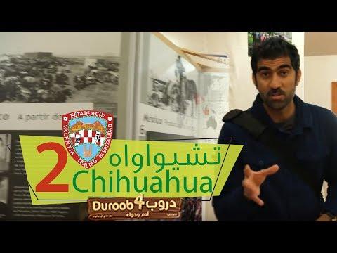 دروب4 تشيواواه 2 | Duroob4 Chihuahua 2