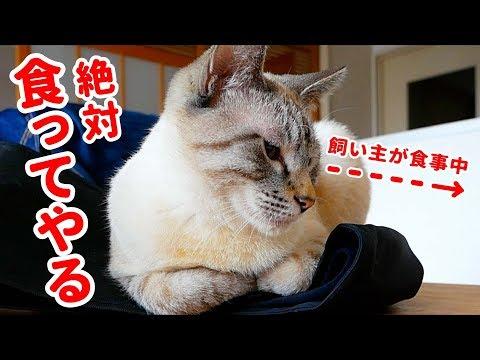 食べちゃダメ〜!匂いに敏感すぎる猫が一瞬のスキを狙ってきます…