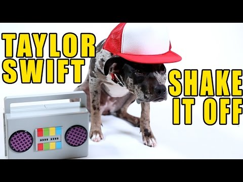 Taylor Swift - Shake It Off (Cute Dog Version)