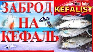 Рыбалка на кефаль Как ловить кефаль в заброд на Черном море Ловим кефаль долгонос сингиль пеленгас