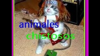 Videos para Morirse dela Risa Animales chistosos gatos y perros(2016)