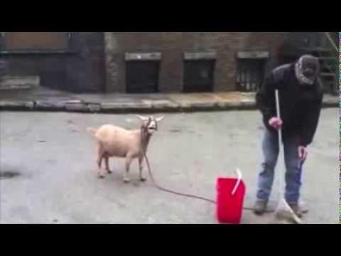 Flo Rida - Good Feeling (Goat Remix)