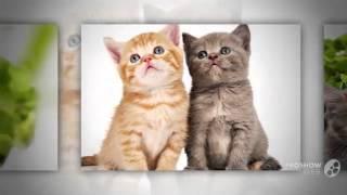 Смотреть онлайн смешные котята!