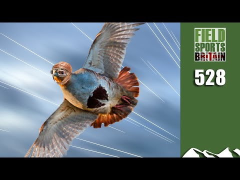 Fieldsports Britain - Super 20-bore Partridge Shoot