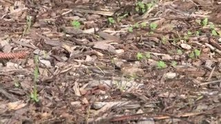 How to Reduce a Muddy Yard Using Mulch : Planting Tips