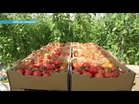Где в Украине выращивают лучшие тепличные помидоры