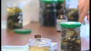 Майкопский Опорный Пункт Пчеловодства(, 2012-01-12T13:24:41.000Z)