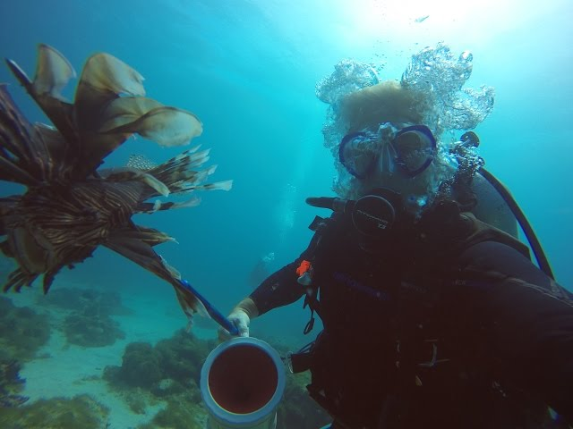 Lionfish Spearing-Aruba Mangel Halto Reef Jan 2015 Roger, Lidy, Norman, Casper from Holland