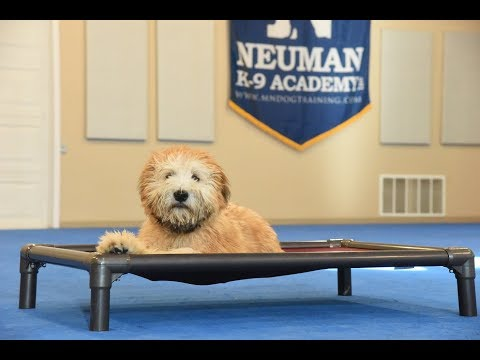 Murphy (Wheaten Terrier) Boot Camp Puppy Training Demonstration