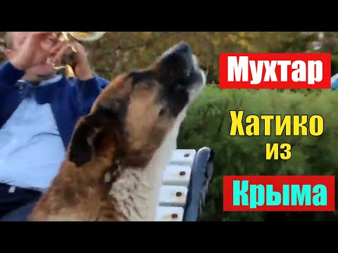 Хатико из Крыма   Пёс Мухтар ждет хозяина на набережной Ялты