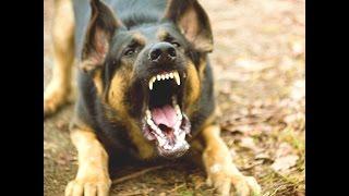 Смерти от домашних животных