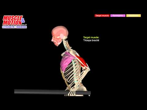 dips - variations with target muscles and synergists - youtube, Muscles