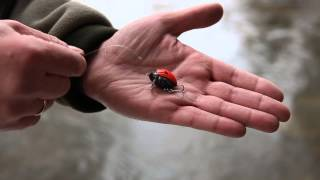 Salmo Fishing Academy - Lil'Bug