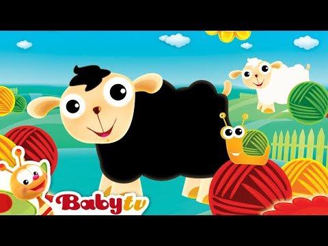 Baa Baa Black Sheep - Nursery Rhymes - By BabyTV