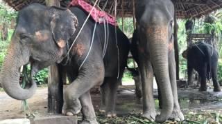 Таиланд/Пхукет, Пхи Пхи