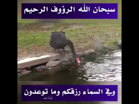 Watch This Video And Say Subhan ALLAH !