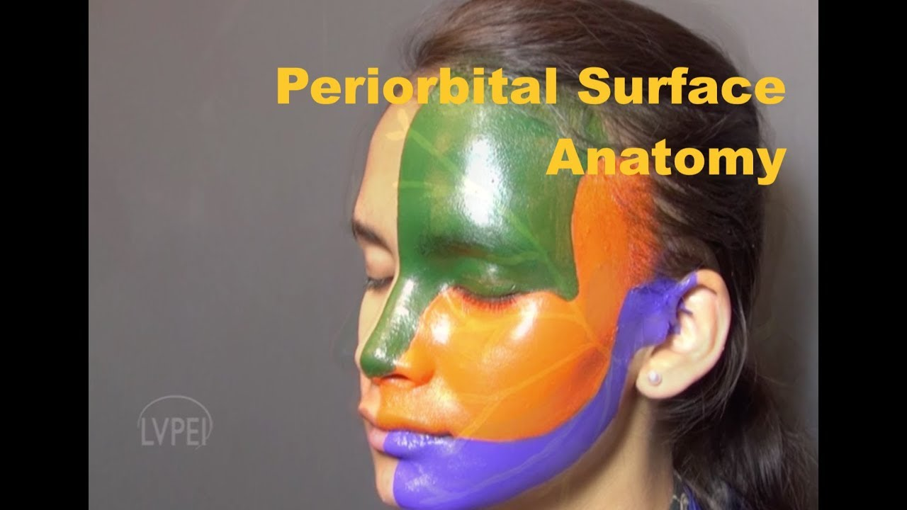 Surface anatomy of the Periorbital Region: A Beginner\'s guide - YouTube