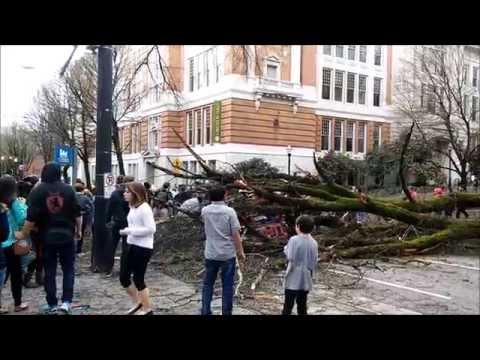 Tree on Portland State campus crushes car