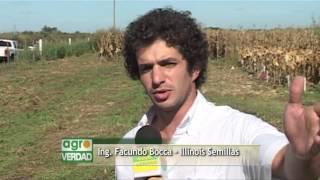 Jornada INTA Jesús Maria - Representante Illinois Semillas - Ing Facundo Bocca