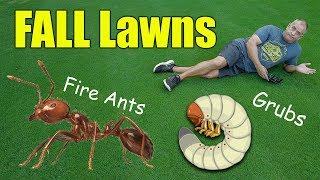 Fall Lawn Care Tips - Fall Grubs - Fire Ants - Fertilizer