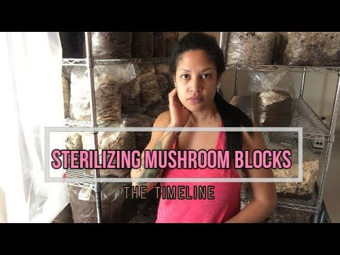 Sterilizing Mushroom Blocks: Timeline from Start to Finish