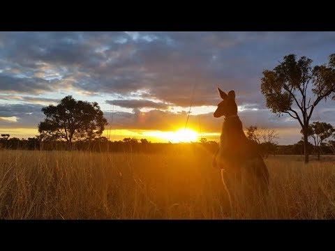 История Австралии