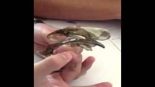 Maqueta de los ventrículos