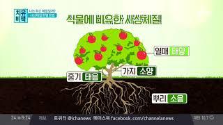나의 체질을 '식물'로 알아본다! 식물에 비유한 '사상체질' thumbnail