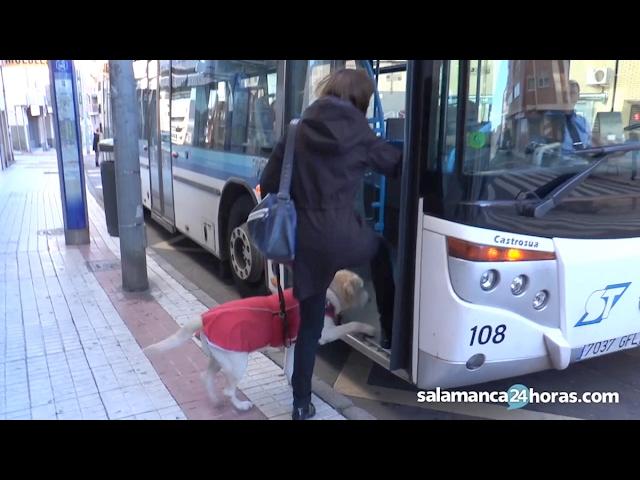 Vivir en Salamanca con un perro guía
