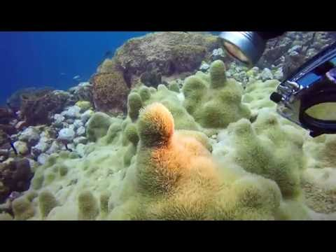 Anchor Reef, St. Vincent SCUBA Diving