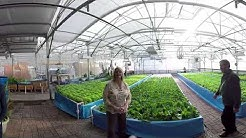 Nelson and Pade VR (3D) Greenhouse Tour