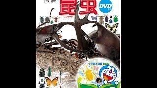 【紹介】DVD付 新版 昆虫 小学館の図鑑 NEO (小池 啓一,小野 展嗣,町田 龍一郎,田辺 力)