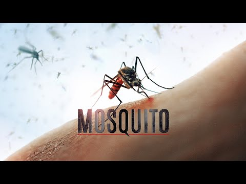 secrets-why-mosquitoes-bite-some-people-more-than-others---pest-control