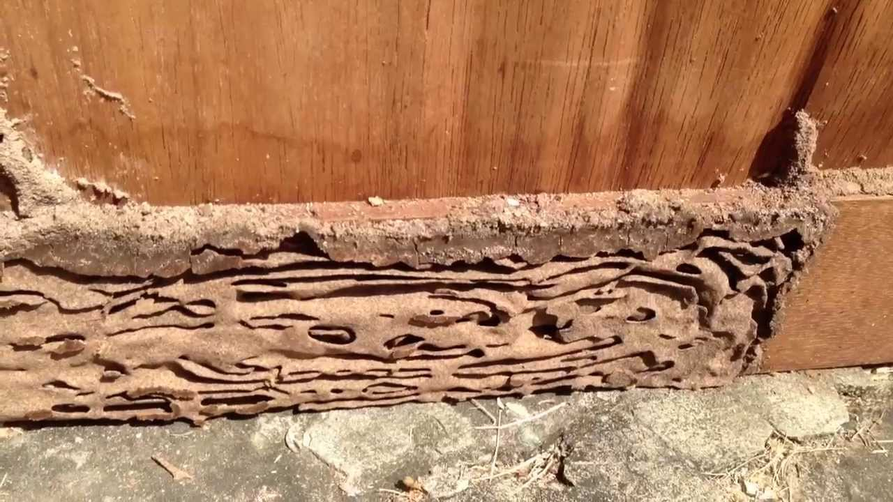 how to detect termite in wood