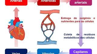 Sanguínea circulação distúrbios da