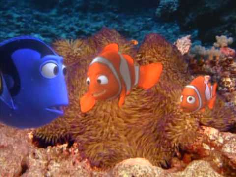finding nemo coral reef - photo #9