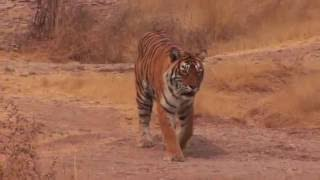 Journeys in India: Panna National Park
