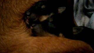 Newborn Puppies. So Cute ♥